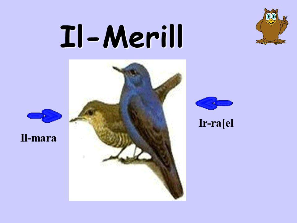 Il-Merill Ir-ra[el Il-mara
